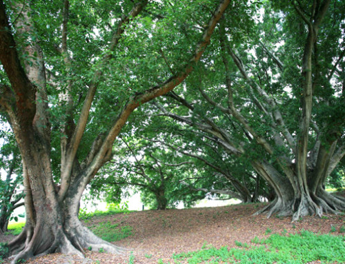 Tree trails
